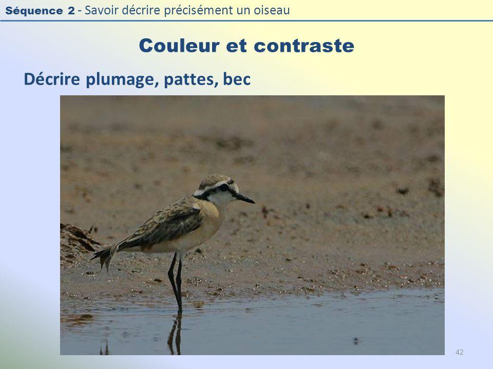 Séquence 2 - Savoir décrire précisément un oiseau Couleur et contraste 42 Décrire plumage, pattes, bec
