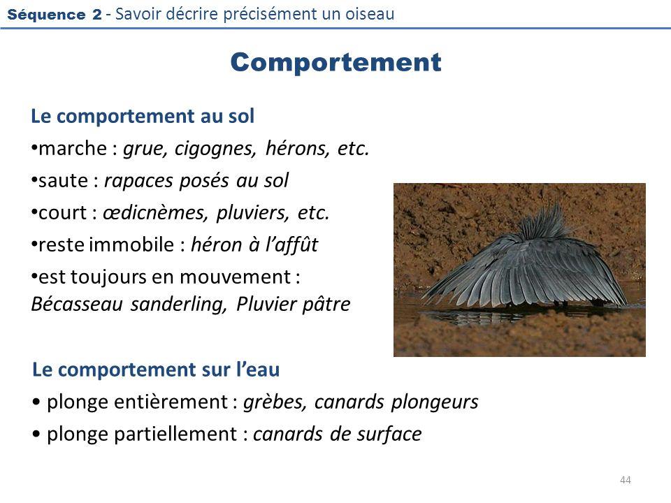 Séquence 2 - Savoir décrire précisément un oiseau Comportement Le comportement au sol marche : grue, cigognes, hérons, etc. saute : rapaces posés au s