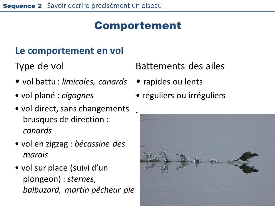 Séquence 2 - Savoir décrire précisément un oiseau Comportement Le comportement en vol Type de vol vol battu : limicoles, canards vol plané : cigognes