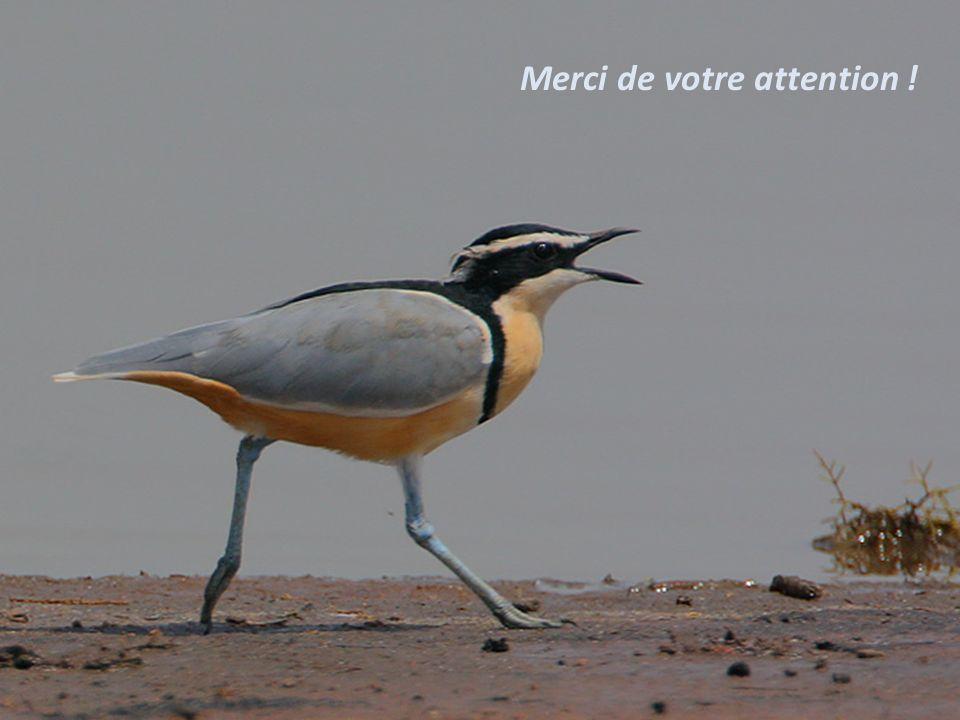 Séquence 2 - Savoir décrire précisément un oiseau 48 Merci de votre attention !