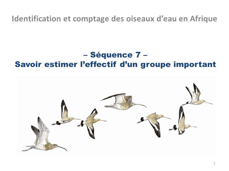 – Séquence 7 – Savoir estimer leffectif dun groupe important Identification et comptage des oiseaux deau en Afrique 1
