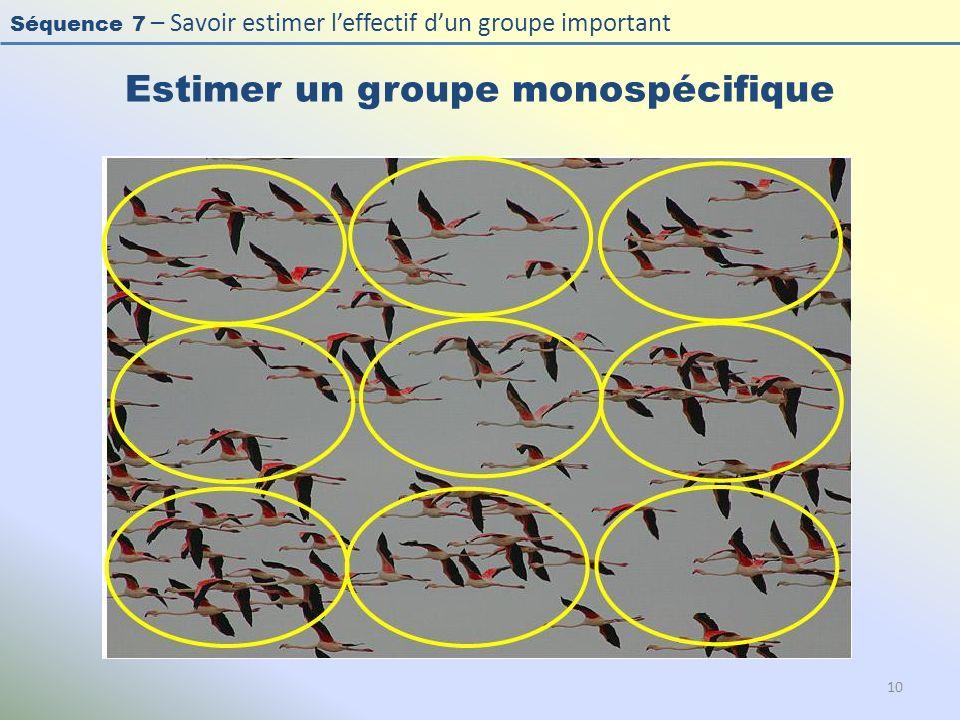Séquence 7 – Savoir estimer leffectif dun groupe important Estimer un groupe monospécifique 10