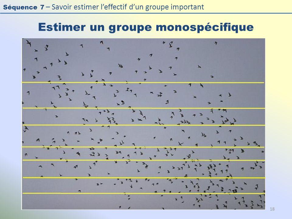 Séquence 7 – Savoir estimer leffectif dun groupe important Estimer un groupe monospécifique 18