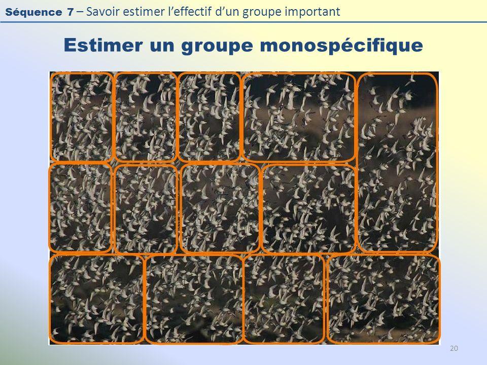 Séquence 7 – Savoir estimer leffectif dun groupe important Estimer un groupe monospécifique 20