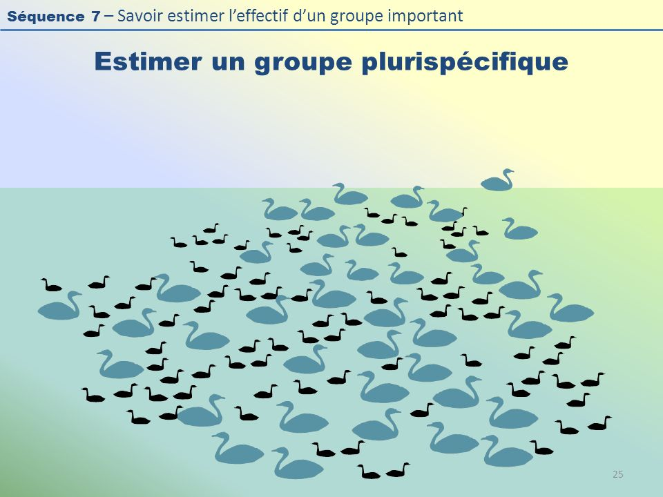 Séquence 7 – Savoir estimer leffectif dun groupe important Estimer un groupe plurispécifique 25