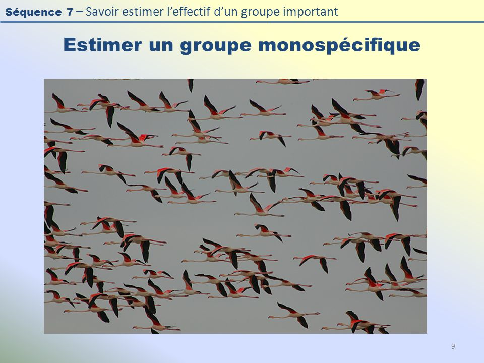 Séquence 7 – Savoir estimer leffectif dun groupe important Estimer un groupe monospécifique 9