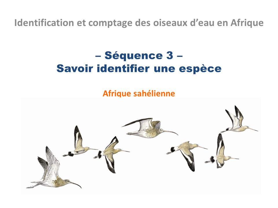 – Séquence 3 – Savoir identifier une espèce Afrique sahélienne Identification et comptage des oiseaux deau en Afrique