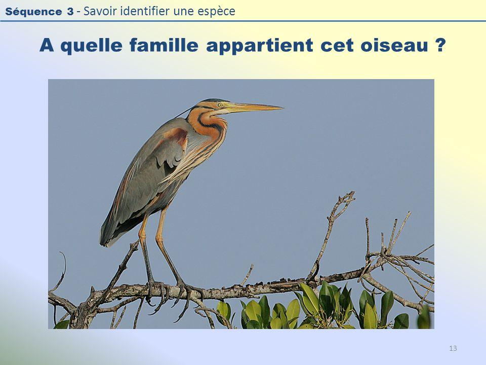 Séquence 3 - Savoir identifier une espèce A quelle famille appartient cet oiseau ? 13
