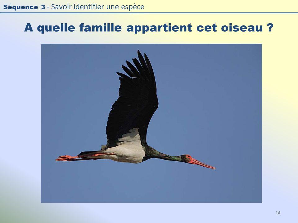 Séquence 3 - Savoir identifier une espèce A quelle famille appartient cet oiseau ? 14