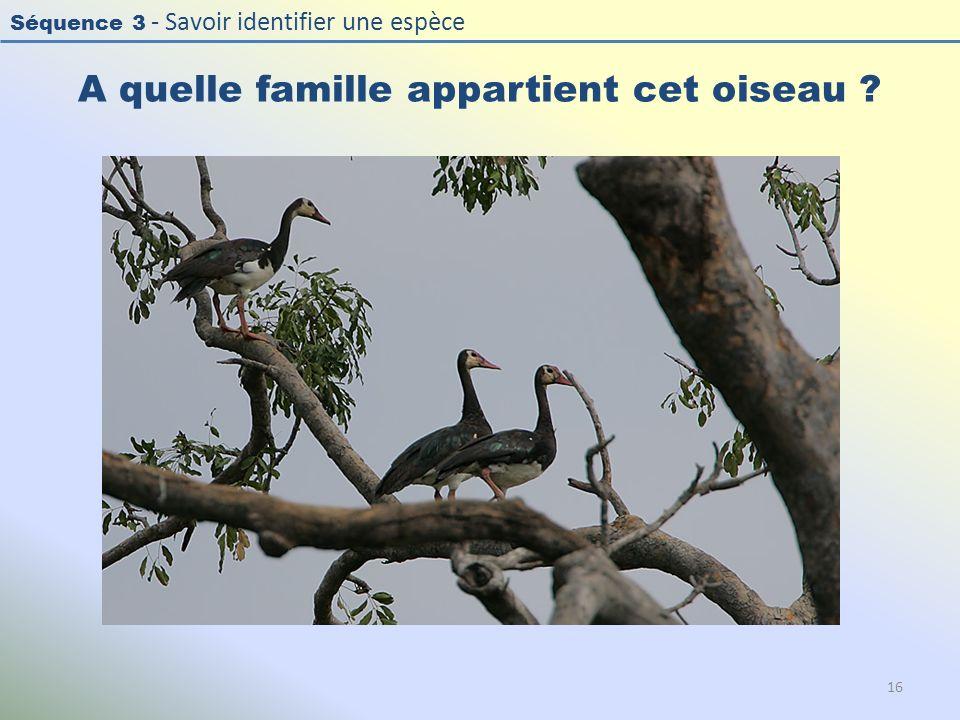 Séquence 3 - Savoir identifier une espèce A quelle famille appartient cet oiseau ? 16