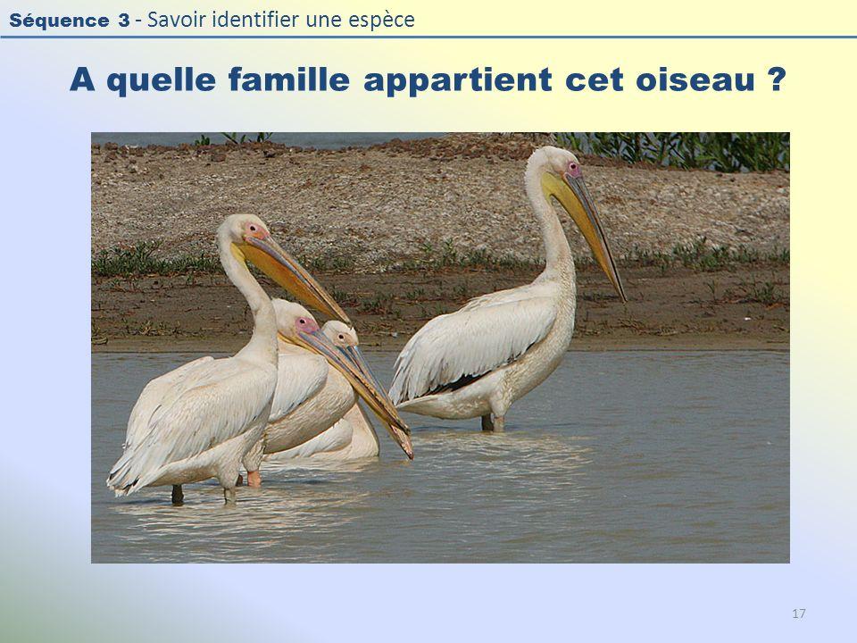 Séquence 3 - Savoir identifier une espèce A quelle famille appartient cet oiseau ? 17