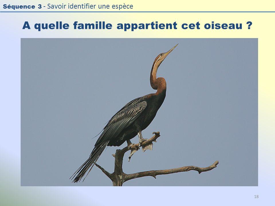 Séquence 3 - Savoir identifier une espèce A quelle famille appartient cet oiseau ? 18