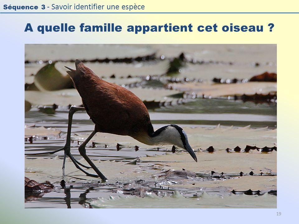 Séquence 3 - Savoir identifier une espèce A quelle famille appartient cet oiseau ? 19