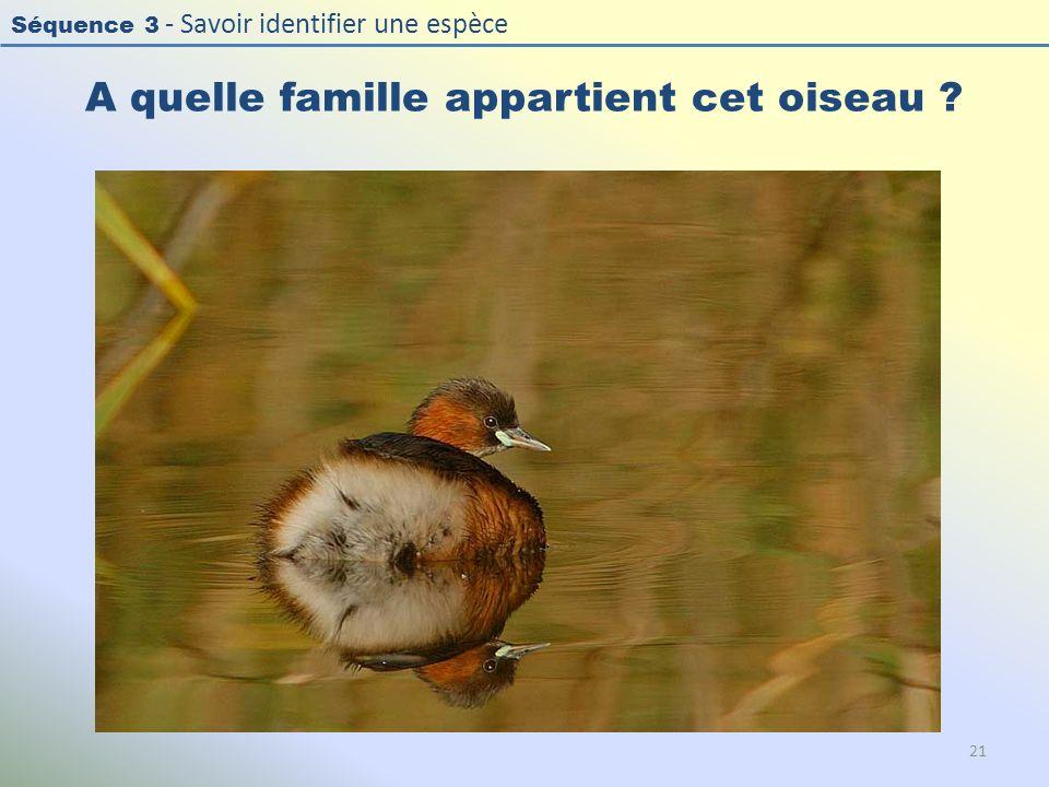 Séquence 3 - Savoir identifier une espèce A quelle famille appartient cet oiseau ? 21