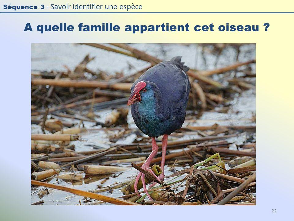Séquence 3 - Savoir identifier une espèce A quelle famille appartient cet oiseau ? 22