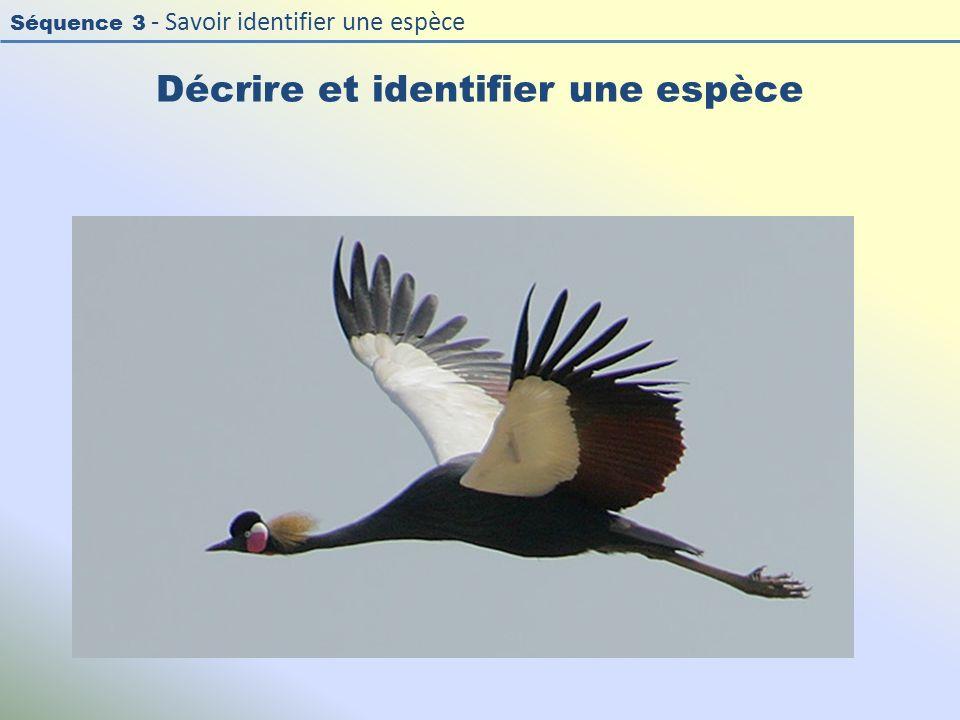 Séquence 3 - Savoir identifier une espèce Décrire et identifier une espèce