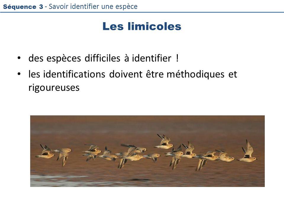 Séquence 3 - Savoir identifier une espèce Les limicoles des espèces difficiles à identifier ! les identifications doivent être méthodiques et rigoureu