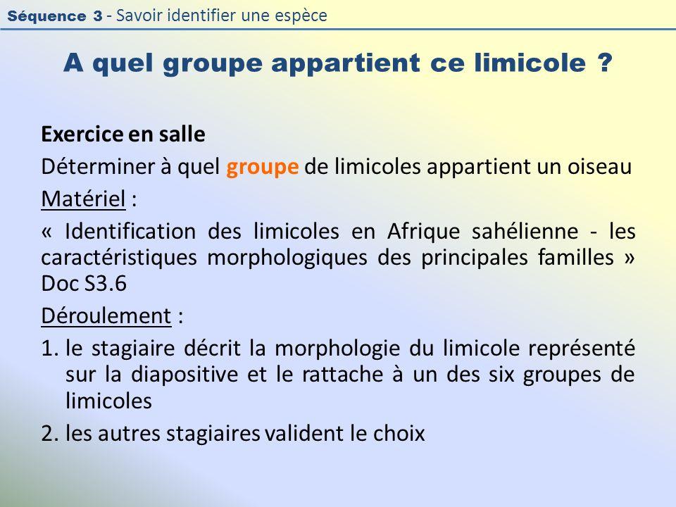 Séquence 3 - Savoir identifier une espèce A quel groupe appartient ce limicole ? Exercice en salle Déterminer à quel groupe de limicoles appartient un