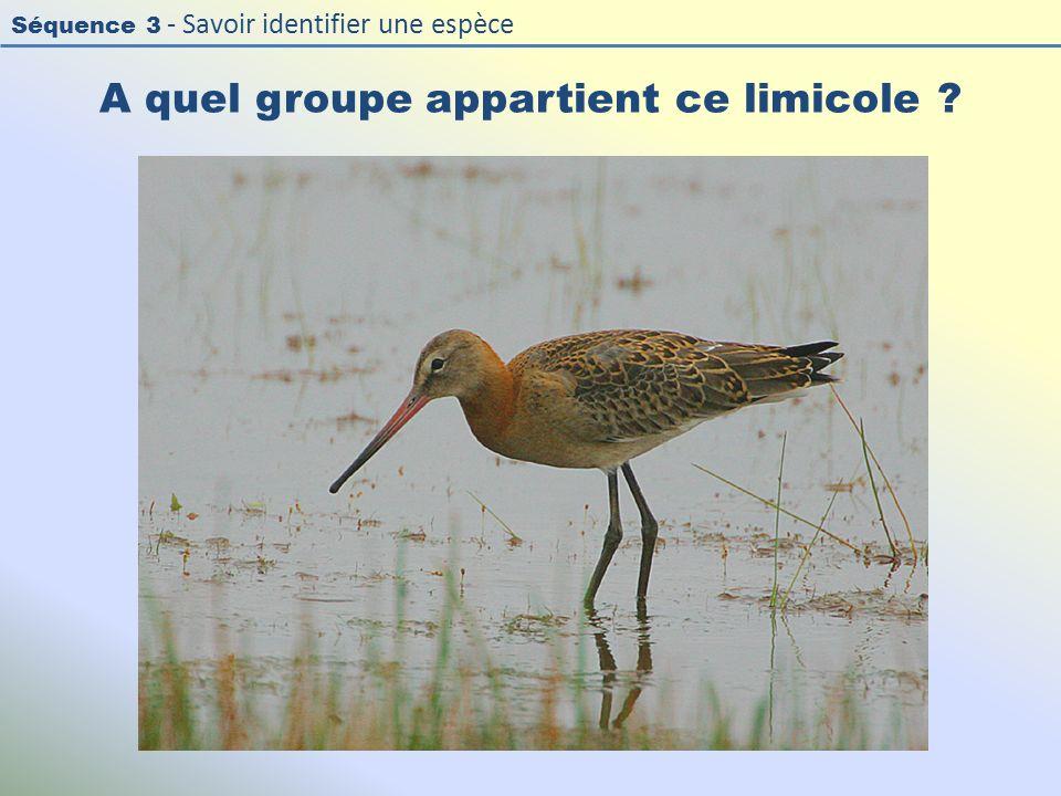 Séquence 3 - Savoir identifier une espèce A quel groupe appartient ce limicole ?