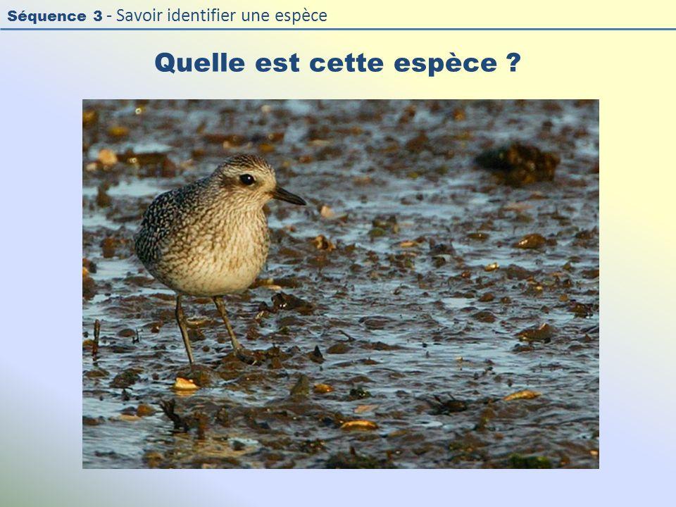Séquence 3 - Savoir identifier une espèce Quelle est cette espèce ?
