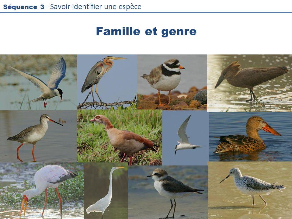 Séquence 3 - Savoir identifier une espèce Famille et genre