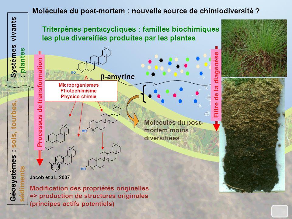 Molécules du post-mortem : nouvelle source de chimiodiversité .
