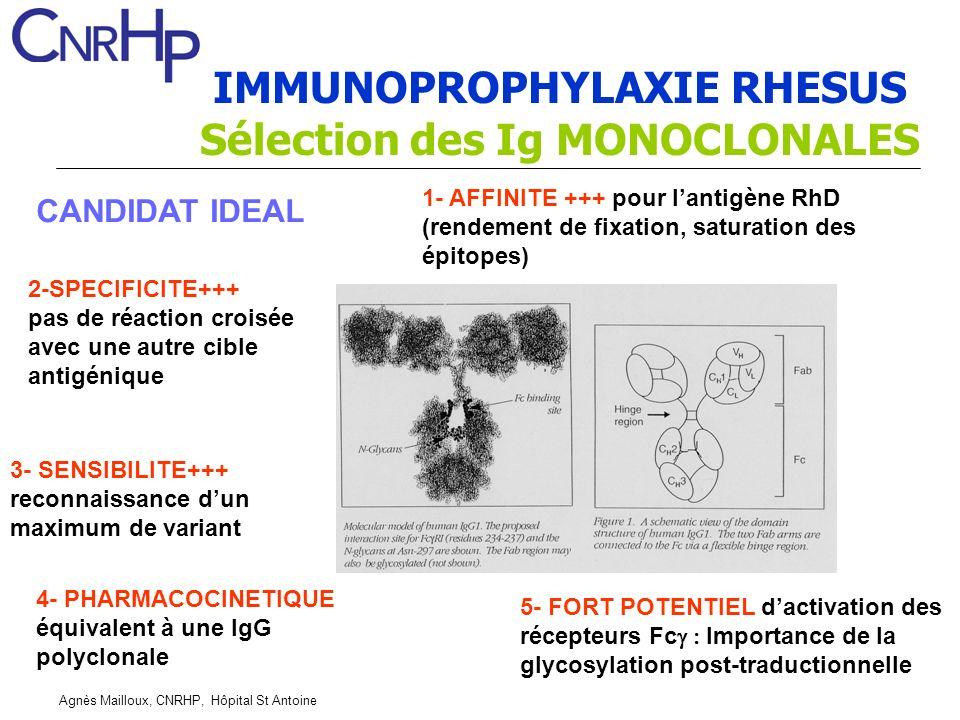 Agnès Mailloux, CNRHP, Hôpital St Antoine IMMUNOPROPHYLAXIE RHESUS Sélection des Ig MONOCLONALES CANDIDAT IDEAL 1- AFFINITE +++ pour lantigène RhD (rendement de fixation, saturation des épitopes) 2-SPECIFICITE+++ pas de réaction croisée avec une autre cible antigénique 3- SENSIBILITE+++ reconnaissance dun maximum de variant 4- PHARMACOCINETIQUE équivalent à une IgG polyclonale 5- FORT POTENTIEL dactivation des récepteurs Fc Importance de la glycosylation post-traductionnelle