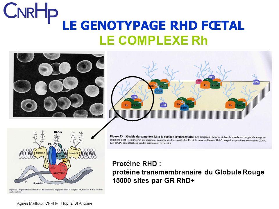 Agnès Mailloux, CNRHP, Hôpital St Antoine LE GENOTYPAGE RHD FŒTAL LE COMPLEXE Rh Protéine RHD : protéine transmembranaire du Globule Rouge 15000 sites par GR RhD+