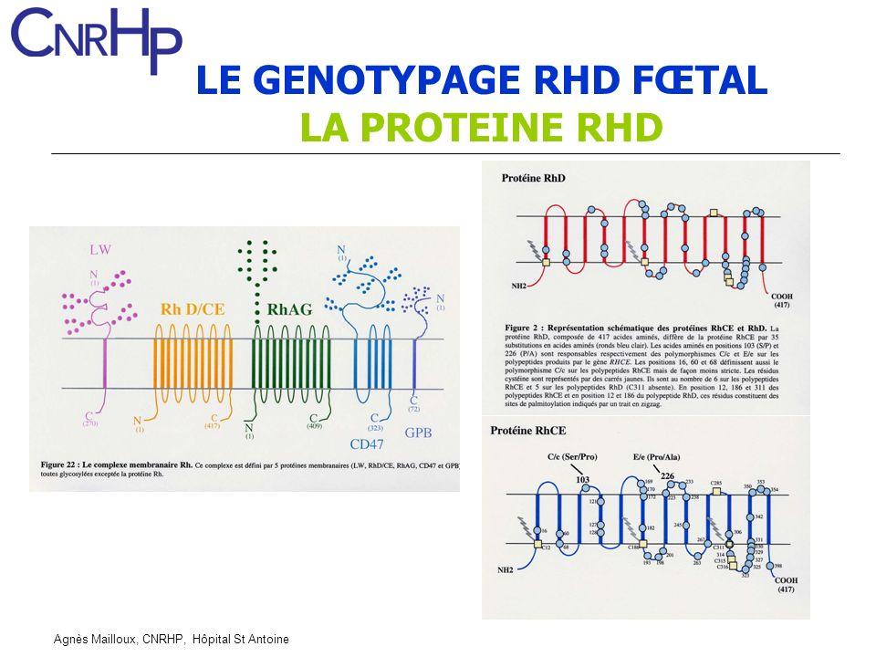 Agnès Mailloux, CNRHP, Hôpital St Antoine LE GENOTYPAGE RHD FŒTAL LA PROTEINE RHD
