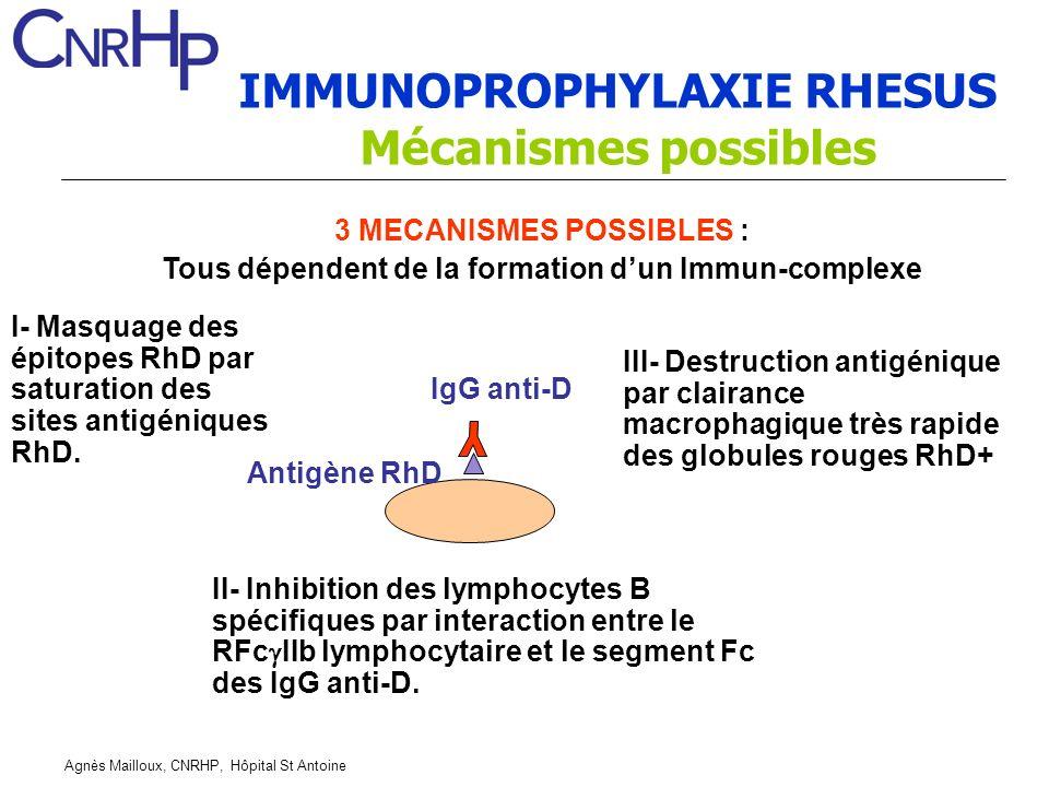 Agnès Mailloux, CNRHP, Hôpital St Antoine IMMUNOPROPHYLAXIE RHESUS Mécanismes possibles 3 MECANISMES POSSIBLES : Tous dépendent de la formation dun Immun-complexe IgG anti-D Antigène RhD I- Masquage des épitopes RhD par saturation des sites antigéniques RhD.