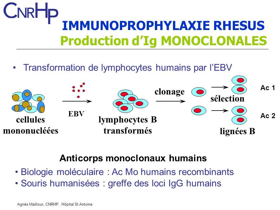 Agnès Mailloux, CNRHP, Hôpital St Antoine Anticorps monoclonaux humains Transformation de lymphocytes humains par lEBV Ac 1 2 EBV clonage sélection lymphocytes B transformés cellules mononucléées Biologie moléculaire : Ac Mo humains recombinants Souris humanisées : greffe des loci IgG humains lignées B IMMUNOPROPHYLAXIE RHESUS Production dIg MONOCLONALES