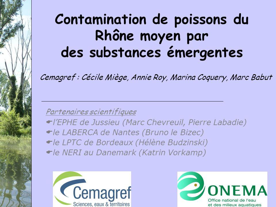 Contamination de poissons du Rhône moyen par des substances émergentes Cemagref : Cécile Miège, Annie Roy, Marina Coquery, Marc Babut Partenaires scie