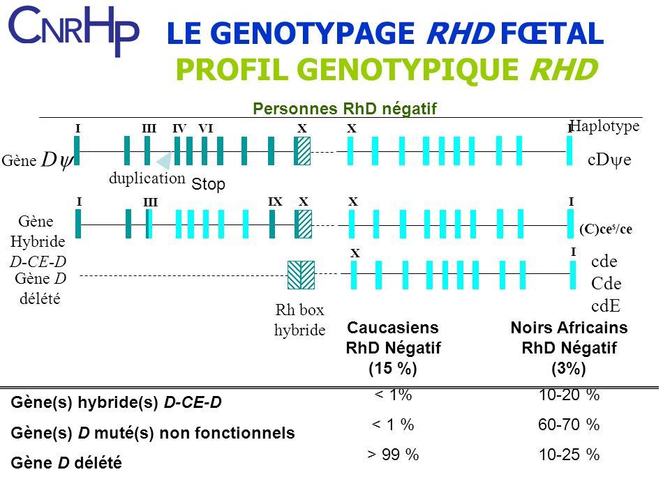 Gène(s) hybride(s) D-CE-D Gène(s) D muté(s) non fonctionnels Gène D délété Caucasiens RhD Négatif (15 %) < 1% > 99 % Noirs Africains RhD Négatif (3%)