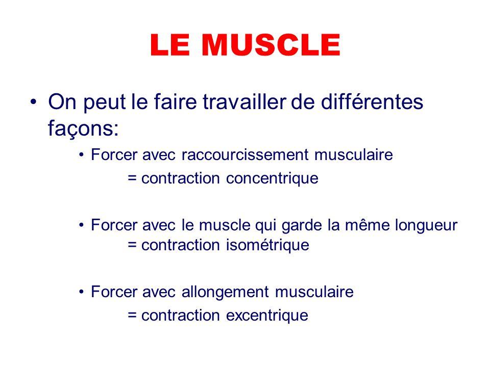 LE MUSCLE On peut le faire travailler de différentes façons: Forcer avec raccourcissement musculaire = contraction concentrique Forcer avec le muscle qui garde la même longueur = contraction isométrique Forcer avec allongement musculaire = contraction excentrique