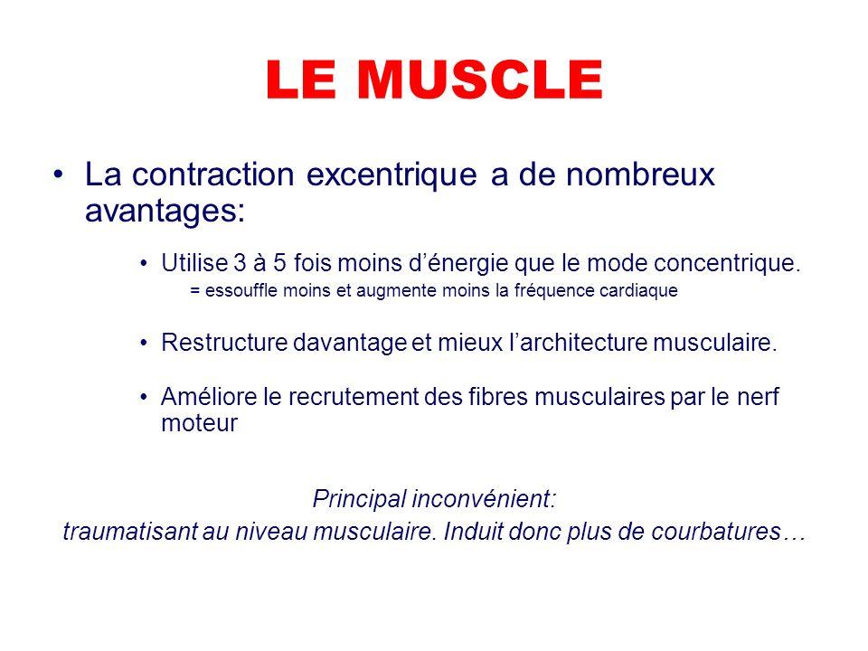 LE MUSCLE La contraction excentrique a de nombreux avantages: Utilise 3 à 5 fois moins dénergie que le mode concentrique.