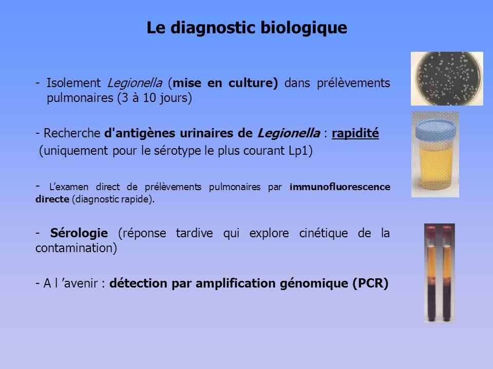 Le diagnostic biologique - Isolement Legionella (mise en culture) dans prélèvements pulmonaires (3 à 10 jours) - Recherche d antigènes urinaires de Legionella : rapidité (uniquement pour le sérotype le plus courant Lp1) - Lexamen direct de prélèvements pulmonaires par immunofluorescence directe (diagnostic rapide).