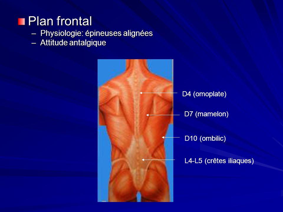Plan frontal –Physiologie: épineuses alignées –Attitude antalgique L4-L5 (crêtes iliaques) D4 (omoplate) D10 (ombilic) D7 (mamelon)