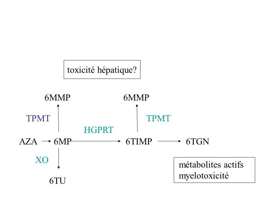 métabolites actifs myelotoxicité toxicité hépatique? XO AZA6MP HGPRT 6TIMP6TGN TPMT 6MMP 6TU 6MMP TPMT