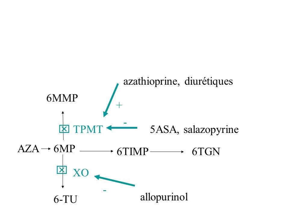 XO 6-TU AZA6MP 6TIMP6TGN TPMT 6MMP allopurinol - azathioprine, diurétiques + - 5ASA, salazopyrine