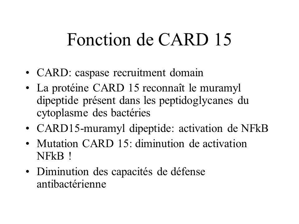 Fonction de CARD 15 CARD: caspase recruitment domain La protéine CARD 15 reconnaît le muramyl dipeptide présent dans les peptidoglycanes du cytoplasme