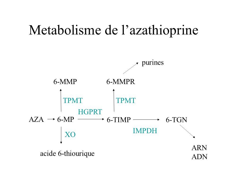 Metabolisme de lazathioprine XO acide 6-thiourique AZA6-MP TPMT 6-MMP HGPRT 6-TIMP6-TGN TPMT 6-MMPR purines IMPDH ARN ADN