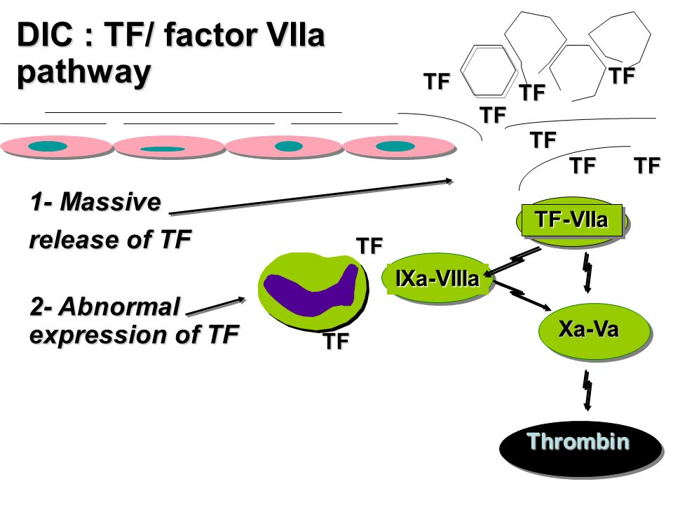 TF TF TF-VIIaTF-VIIa Xa-Va Thrombin IXa-VIIIa TF TF TF 1- Massive release of TF 2- Abnormal expression of TF TF TF TF DIC : TF/ factor VIIa pathway TF