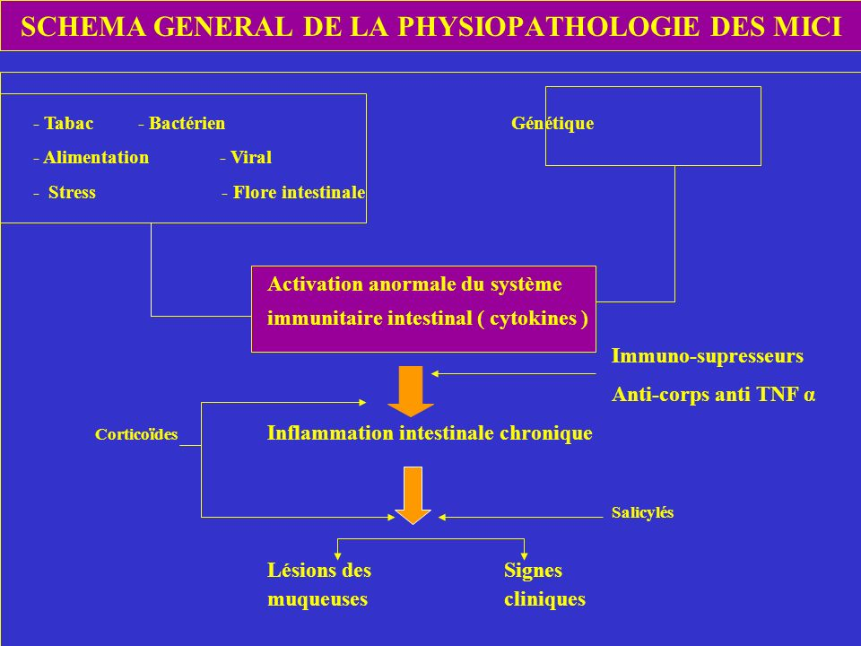 SCHEMA GENERAL DE LA PHYSIOPATHOLOGIE DES MICI - Tabac - Bactérien Génétique - Alimentation - Viral - Stress - Flore intestinale Activation anormale d