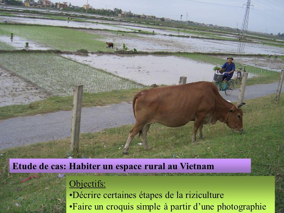 Etude de cas: Habiter un espace rural au Vietnam Objectifs: Décrire certaines étapes de la riziculture Faire un croquis simple à partir dune photograp