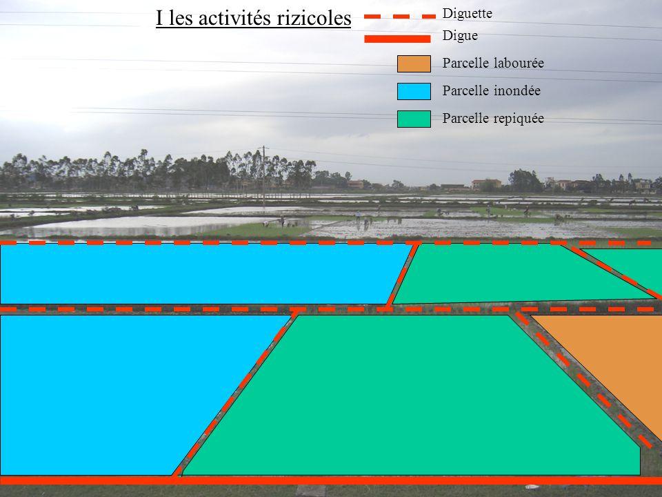 I les activités rizicoles Diguette Digue Parcelle labourée Parcelle inondée Parcelle repiquée
