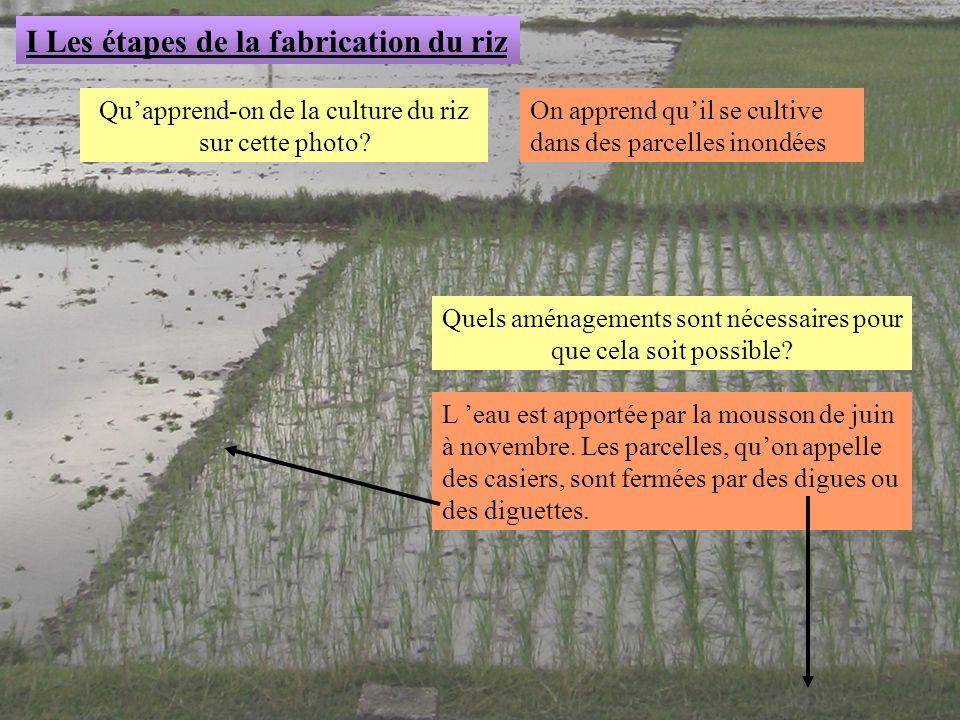 Quapprend-on de la culture du riz sur cette photo? I Les étapes de la fabrication du riz On apprend quil se cultive dans des parcelles inondées Quels