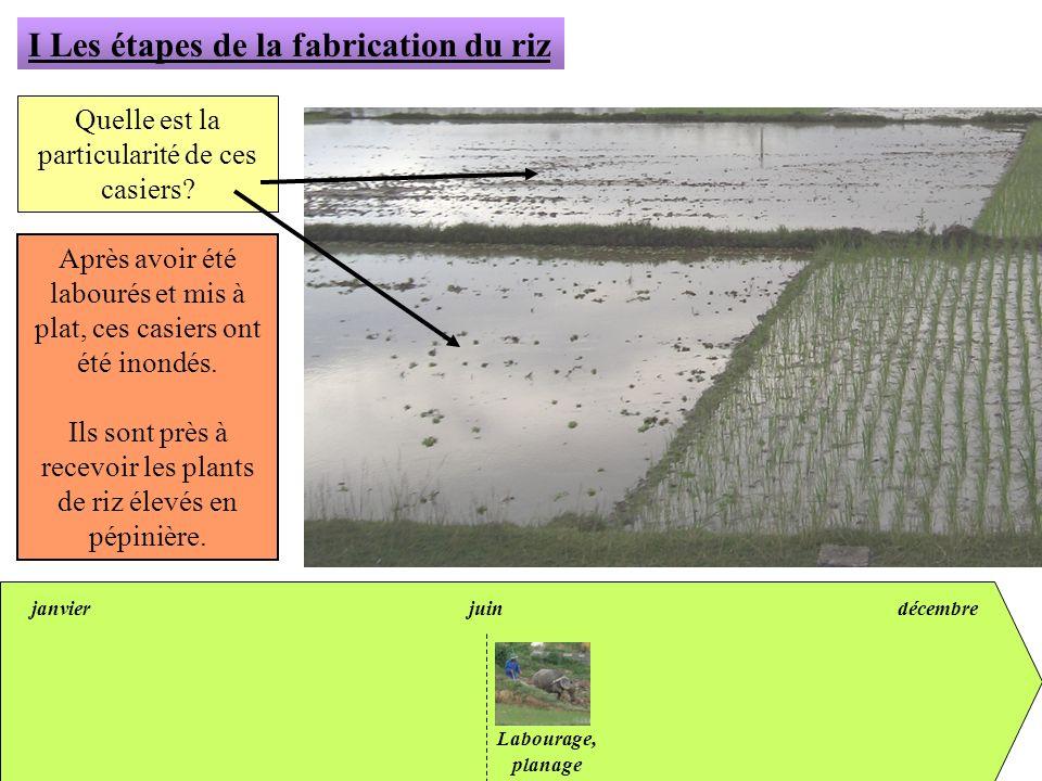 janvierjuindécembre I Les étapes de la fabrication du riz Quelle est la particularité de ces casiers? Après avoir été labourés et mis à plat, ces casi