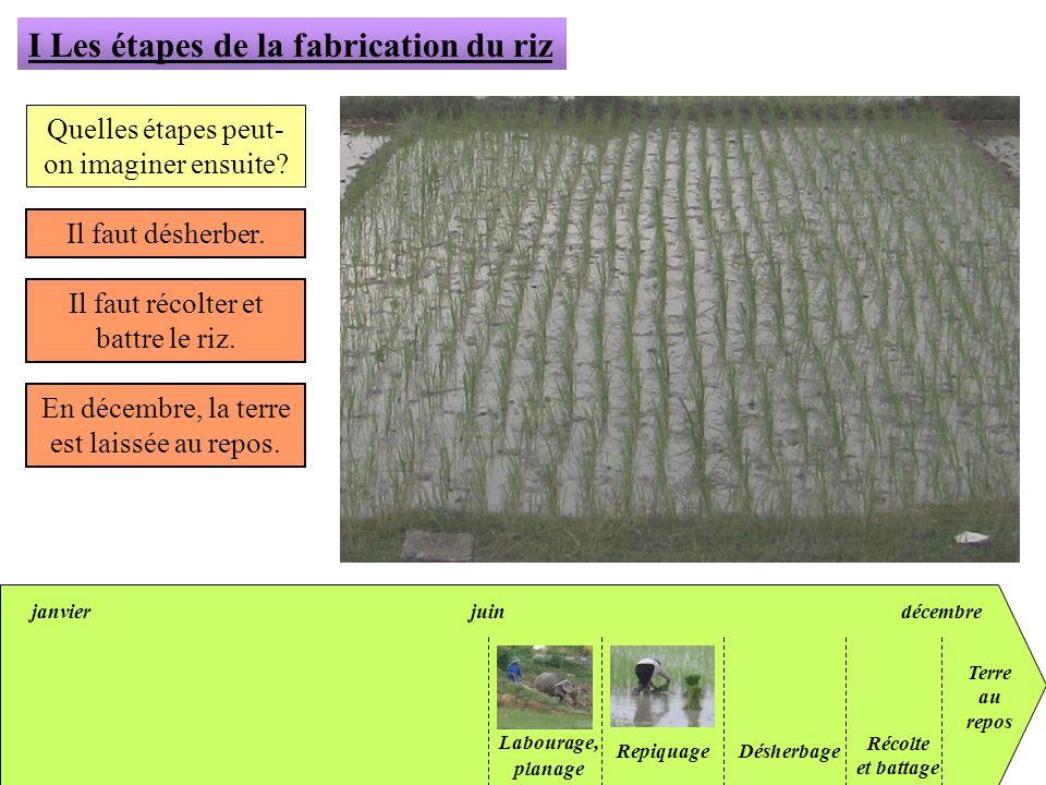 janvierjuindécembre I Les étapes de la fabrication du riz Quelles étapes peut- on imaginer ensuite? Il faut désherber. Il faut récolter et battre le r