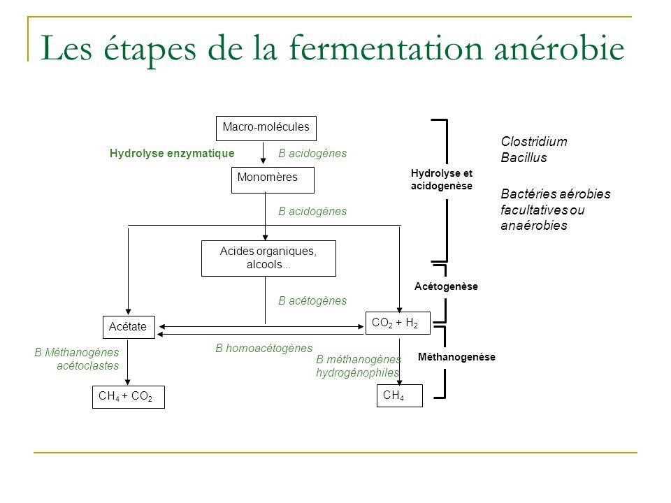 Les étapes de la fermentation anérobie CH 4 + CO 2 B Méthanogènes acétoclastes B homoacétogènes CH 4 B méthanogènes hydrogénophiles Acétate Hydrolyse