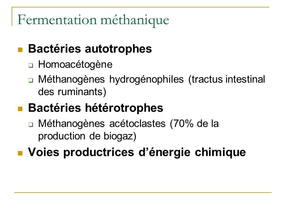 Fermentation méthanique Bactéries autotrophes Homoacétogène Méthanogènes hydrogénophiles (tractus intestinal des ruminants) Bactéries hétérotrophes Mé